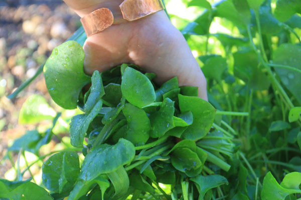 Anahata-diet-organic-local