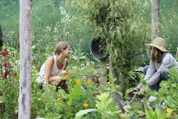 Anahata-organic-garden
