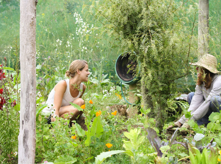 Yoga & Permaculture Design Course – 16 Day Retreat